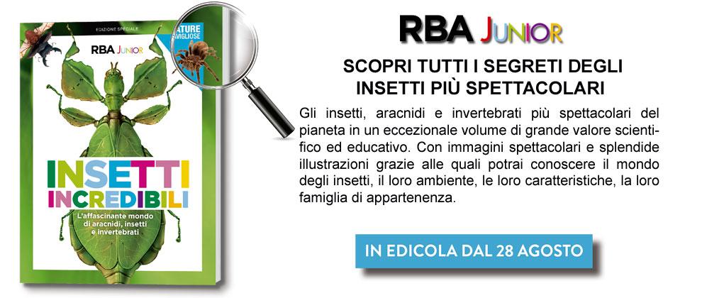 http://www.rbaitalia.it/wp-content/uploads/2019/07/BANNERJUNIOR.jpg